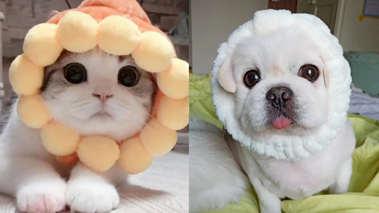 , Aww Cute And Funny Cats And Dogs Compilation Tricksy