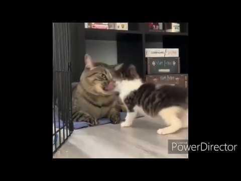 , CUTE AND FUNNY CAT VIDEOS TO START YOUR 2020 SD
