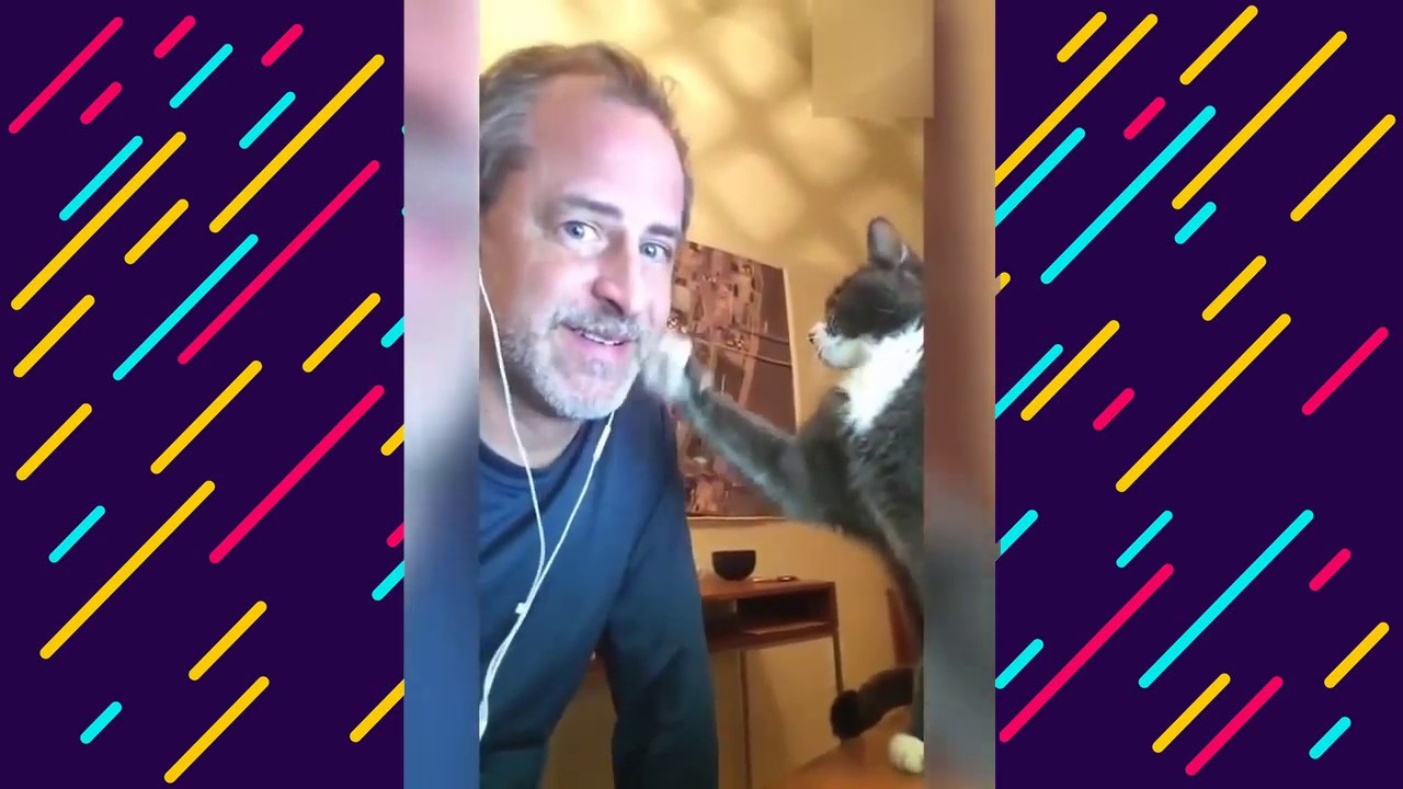 , Funny Cat Videos Try Not To Laugh Animals