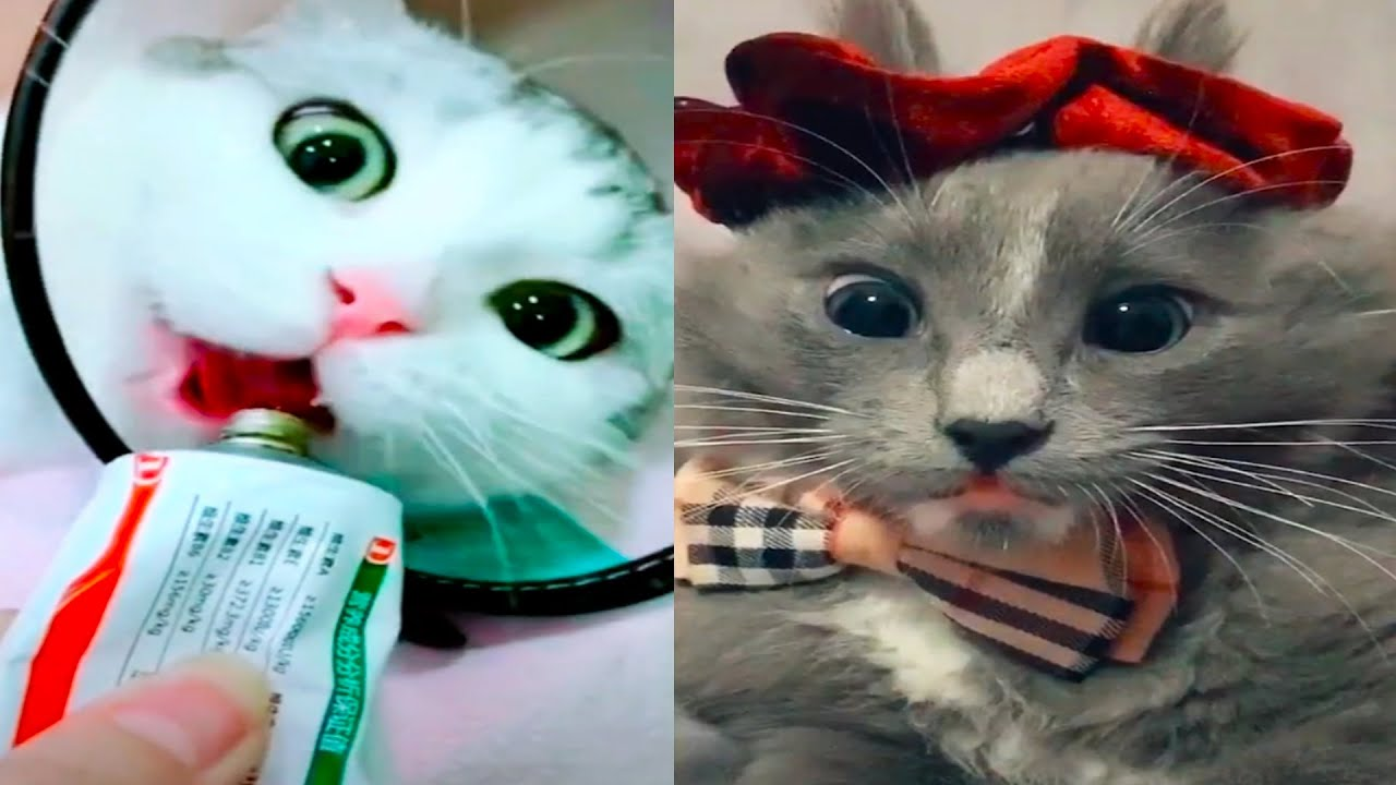 , Funny Cats TikTok Videos 2020 Cute Baby Cat Compilation 9