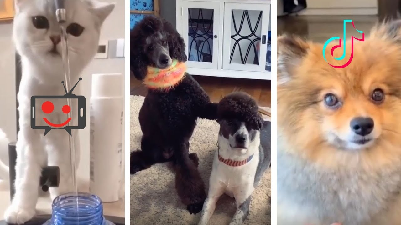 , Funny DOGS amp CATS Compilation BEST FUNNY VIDEOS