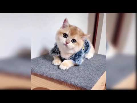 , Funny2020 Baby Cats Cute and Funny Cat Videos
