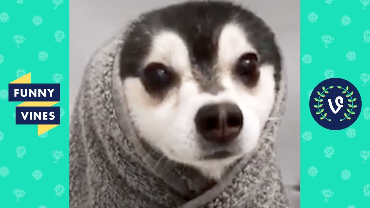 , TRY NOT TO LAUGH New Year New Funny Animals