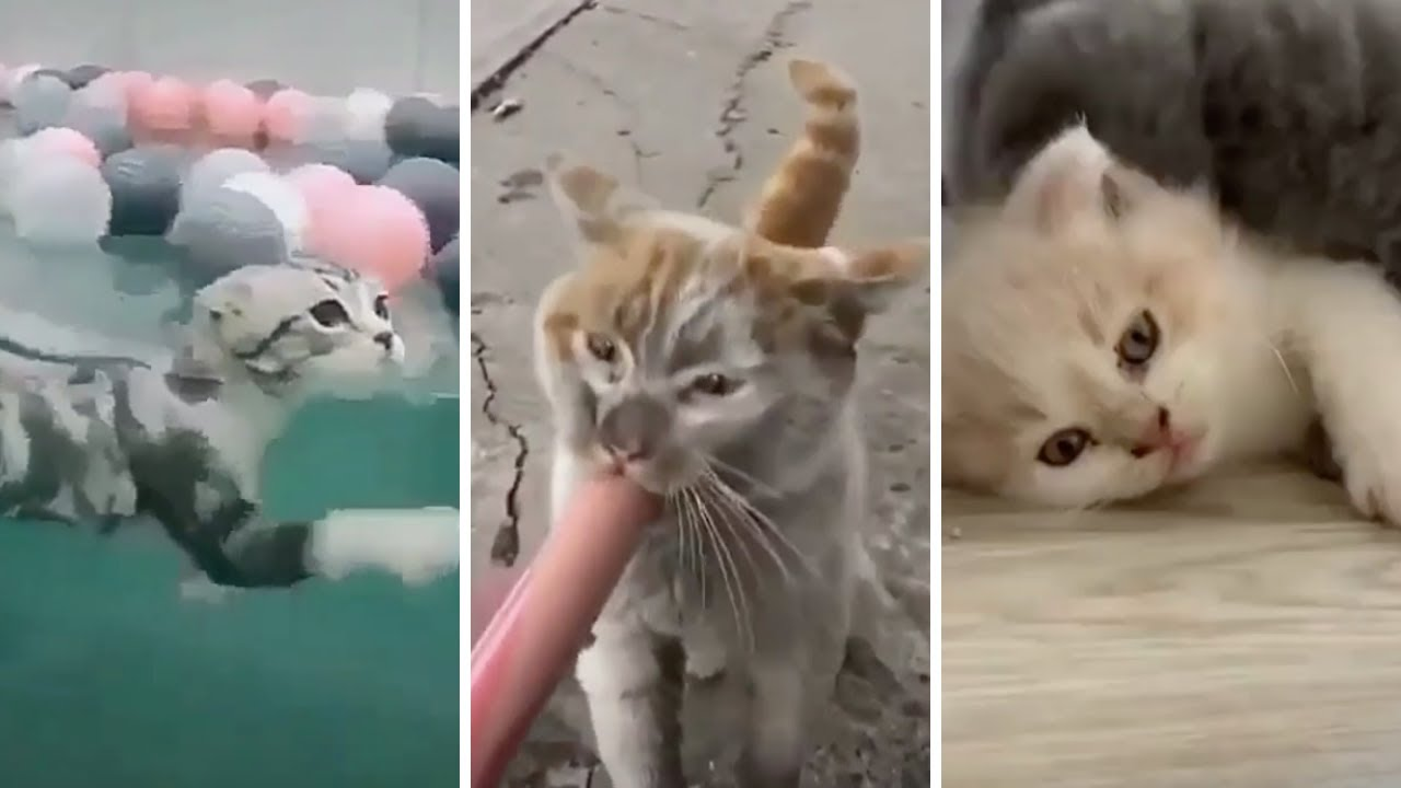 , BEST CAT MEMES COMPILATION OF 2020 FUNNY CATS VIDEOS 20