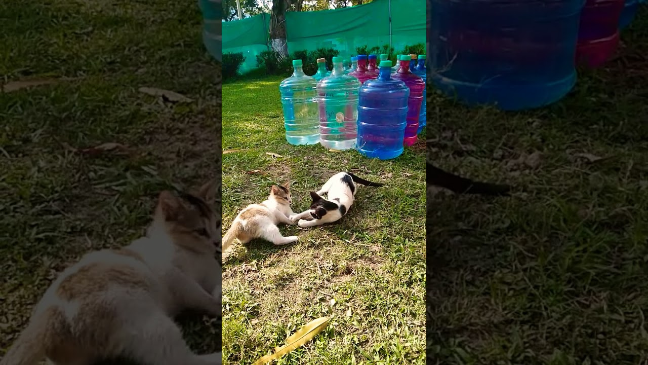 , Baby Cats 2020 Cute and Funny Cat Videos Compilation 27