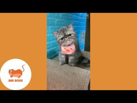 , Cute Dogs and Cats Funny Cats and Dogs Videos Compilation