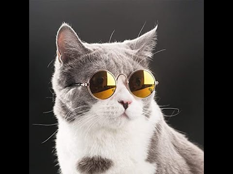 , Funny Cats Will Make You Laugh For Hours NEW 2020