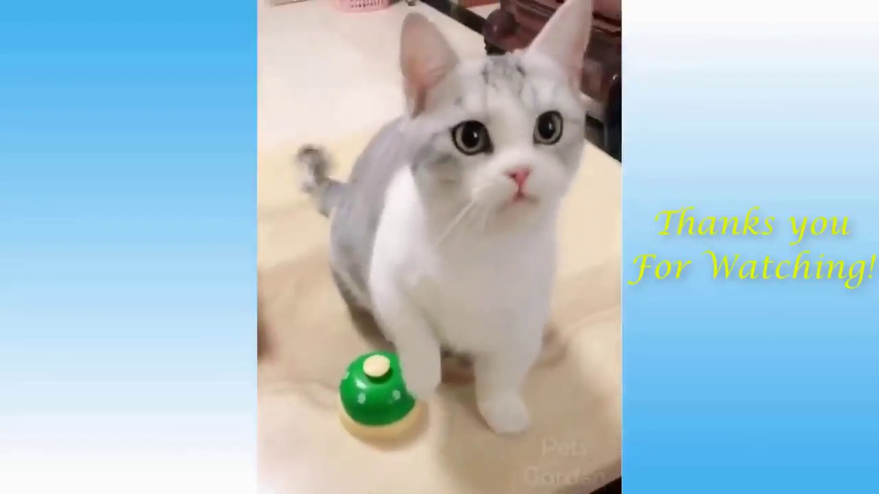 , Funny cats and dogs Funny Animals Compilation