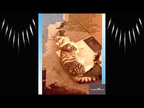 , funny cats vine compilation funny cats 2020 vine