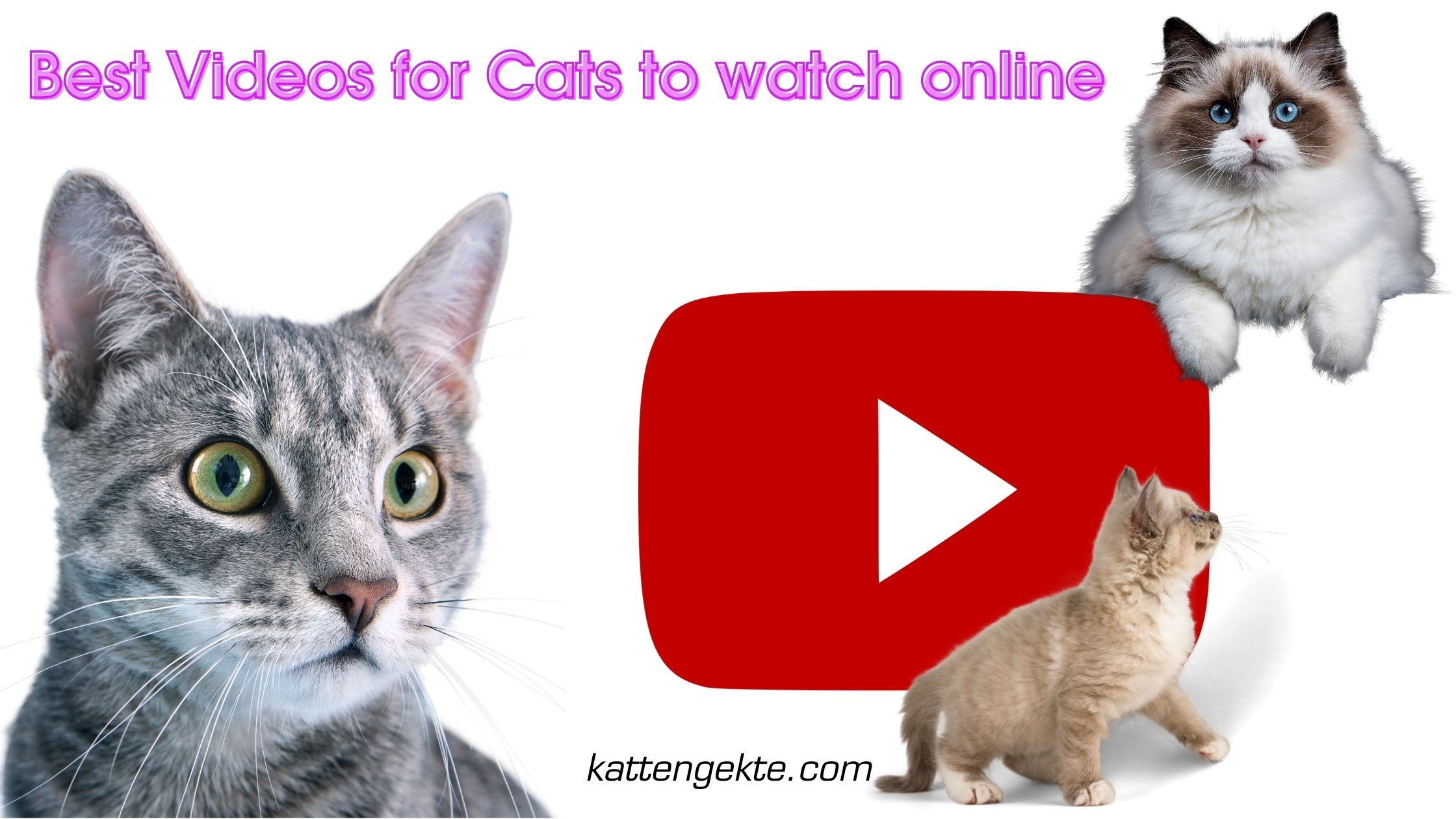 Best Videos for Cats to watch online