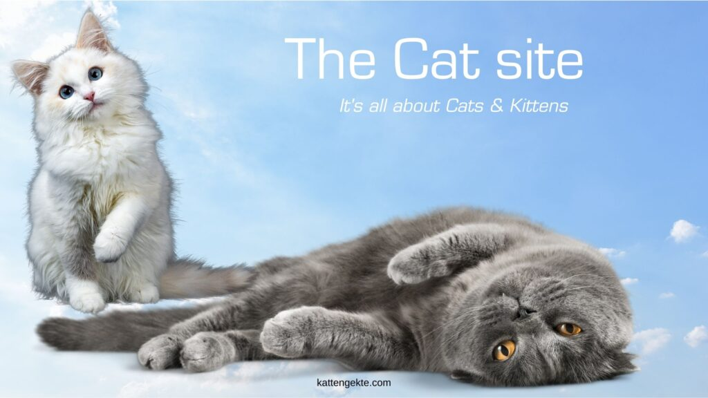 The Cat site - its all about cats and kittens - cat shop online