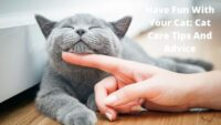 Have Fun With Your Cat_ Cat Care Tips And Advice