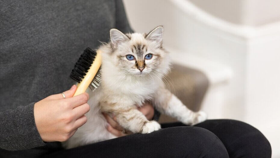Cat Grooming Tips to Help You Groom Your Cat